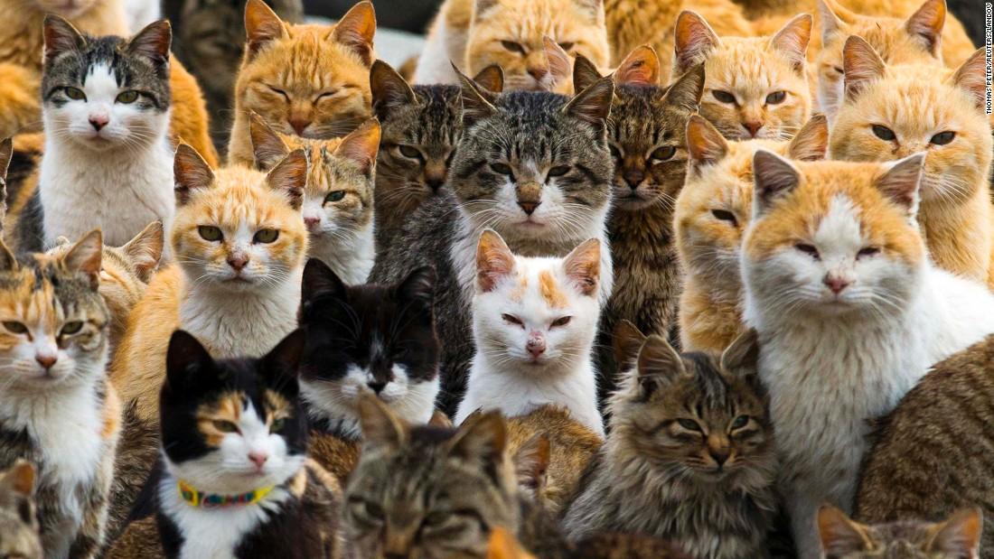 dunyada-kac-kedi-var