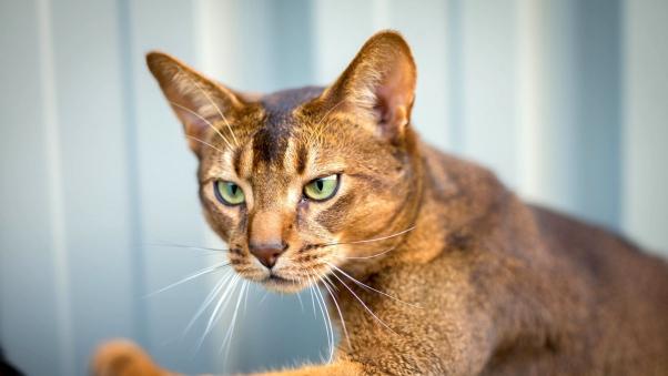 kediler-kafalarinin-gectigi-her-yerden-gecebilirler
