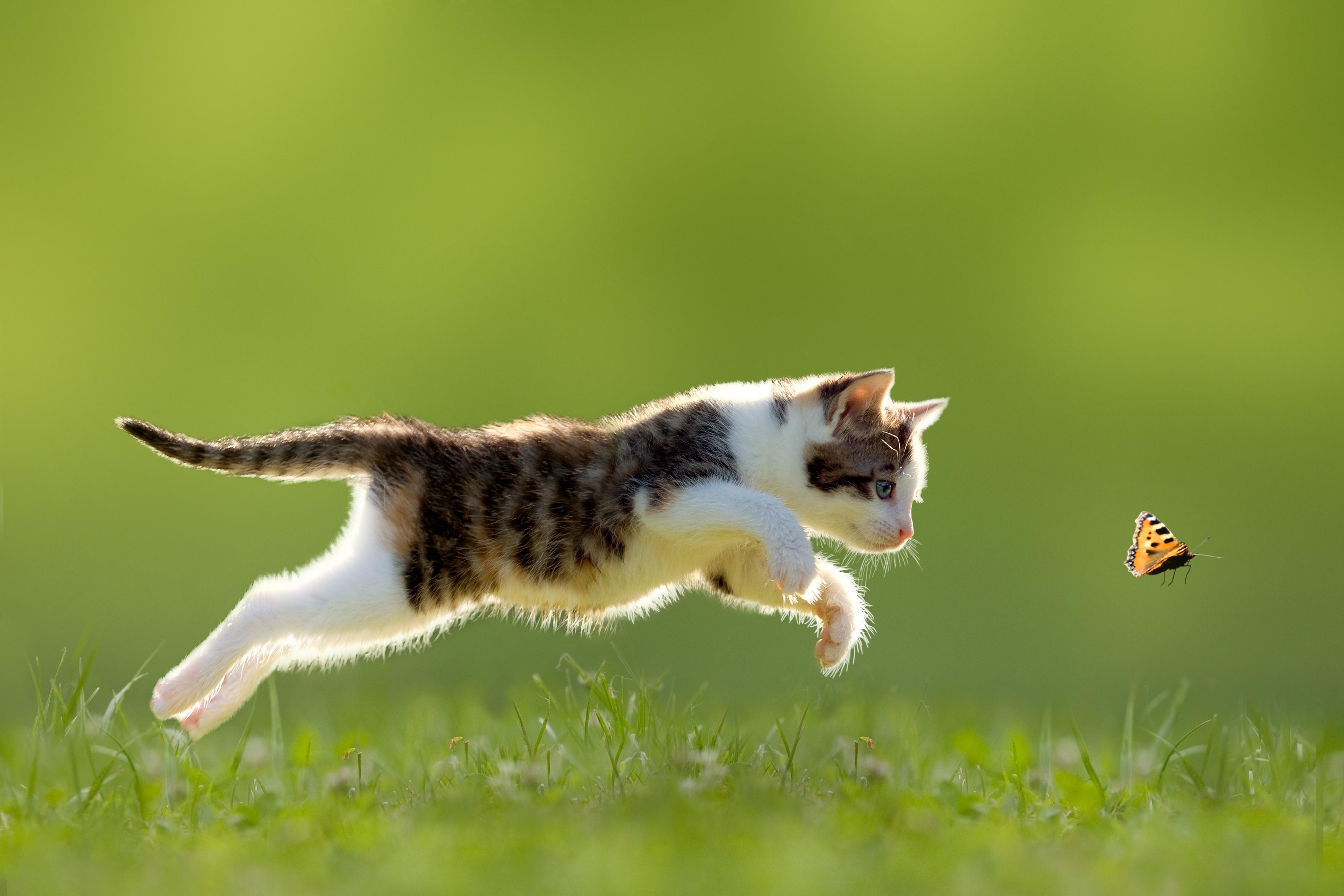 kediler-ne-kadar-hizli-kosabilir