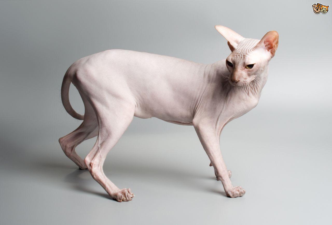 kediler-neden-yikanmaz
