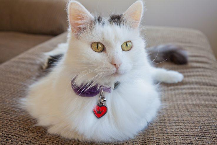 kediler-yikanir-mi-3