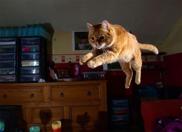 kedilerin-garip-hareketleri