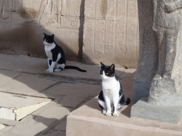 kedilerin-tarihi-1