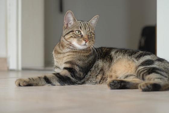 kedinin-guveni-nasil-kazanilir
