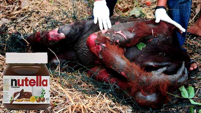 Nutella Palm yağı için orangutanları öldürüyor!