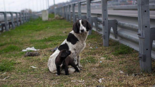 Milas Önder Gazetesi Sokak Köpeklerini Hedef Gösterdi 11
