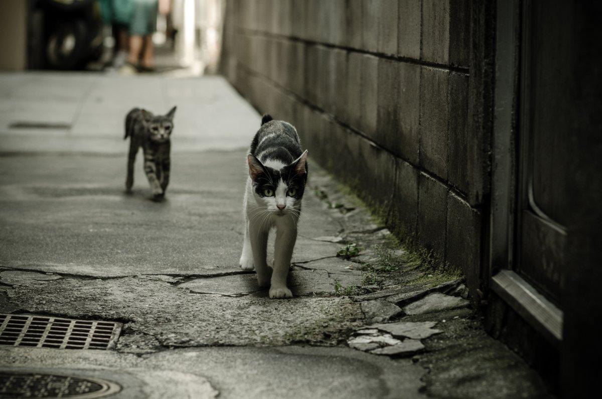 sokak-kedileri-1