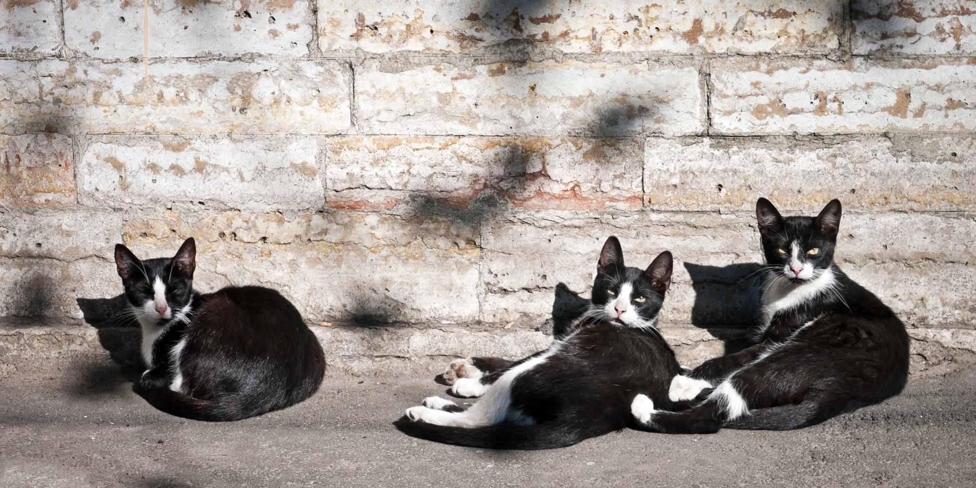 Bir sokak kedisi sahiplenmeniz için 5 harika neden