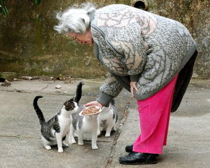 sokak-kedilerini-besleyen-kadin