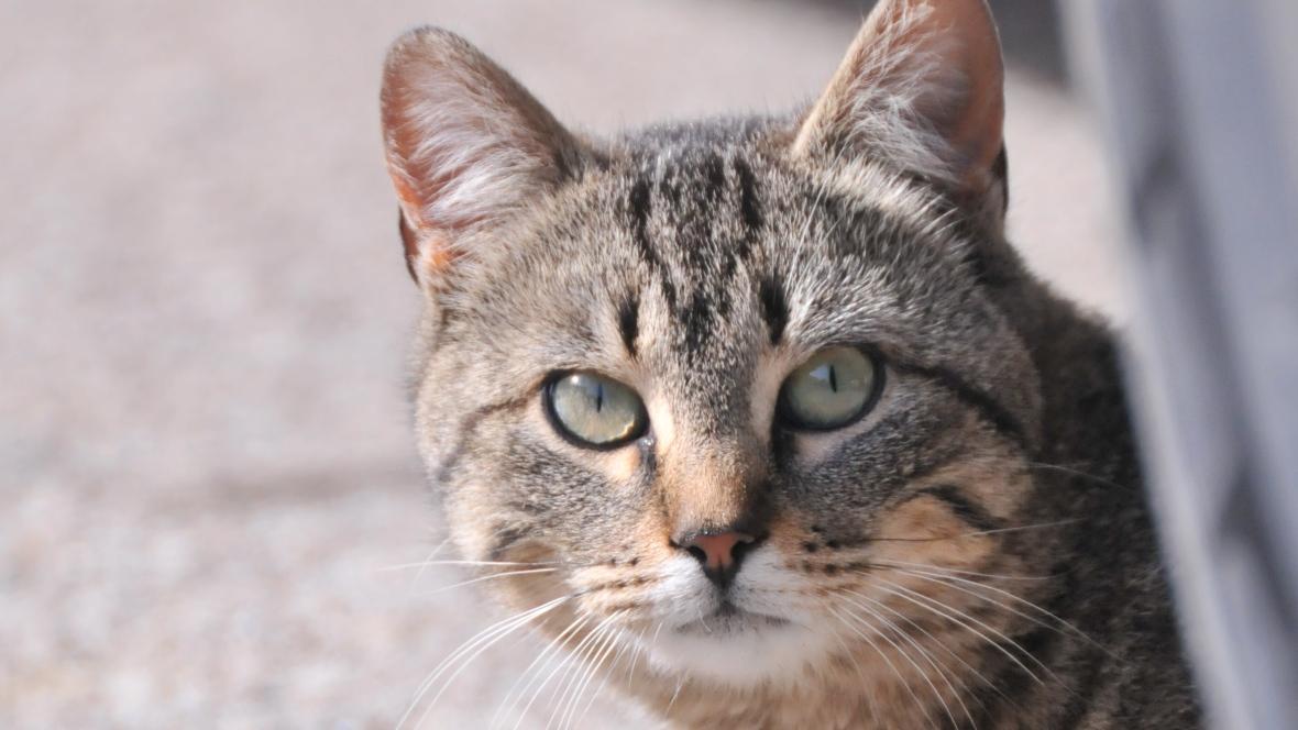 sokak-kedisi-sahiplenmek