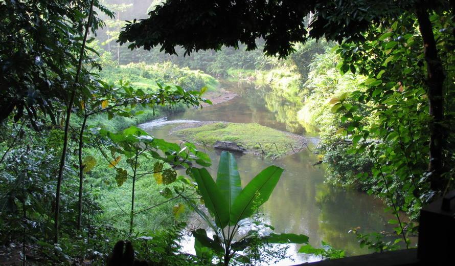 sumatra-yagmur-ormanlari