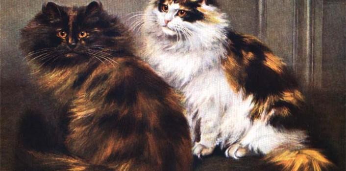 Solda görülen Tortoise shell, sağdaki ise calico kedisi