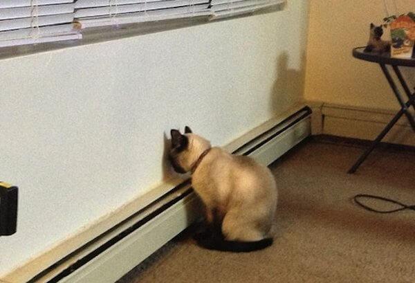 kafasini-duvara-yaslamis-kedi