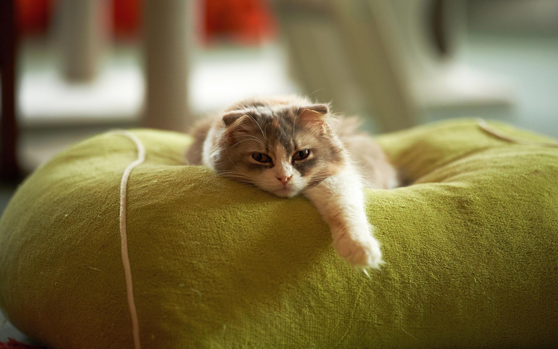kediler-geceleri-neden-uyumaz-1