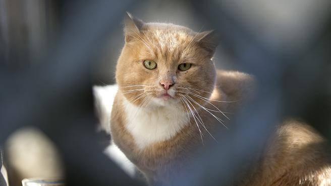 kediler-geceleri-neden-uyumaz-2