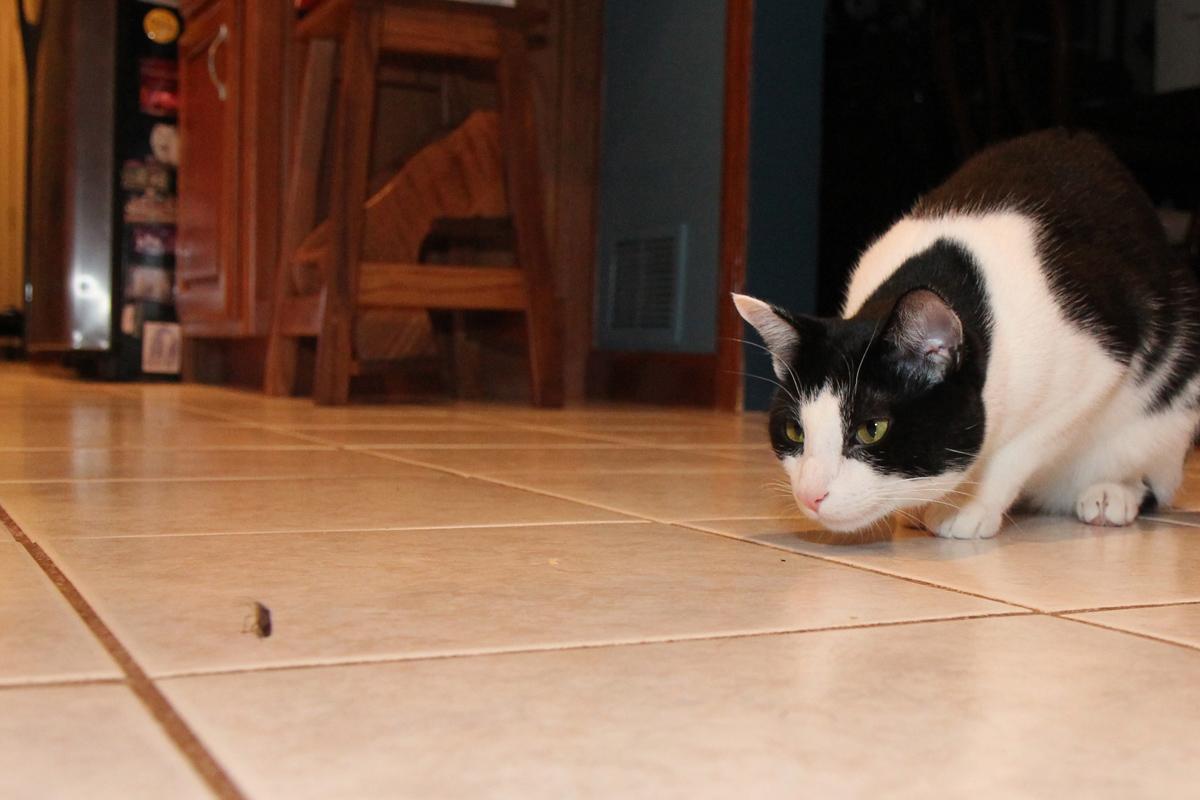 kediler-geceleri-neden-uyumaz-3