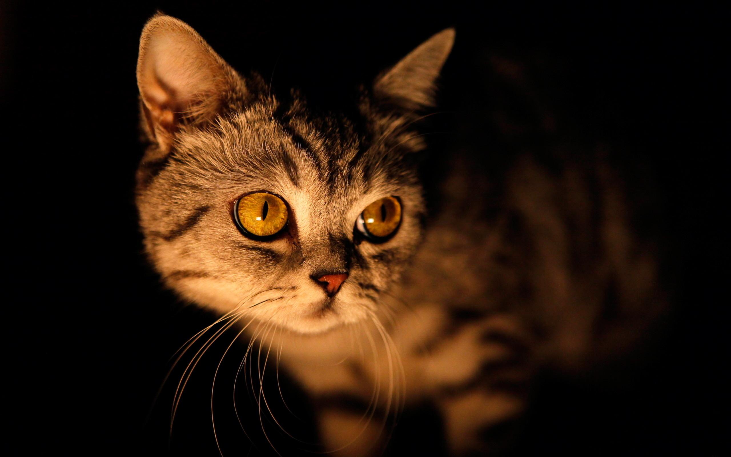 kediler-geceleri-neden-uyumaz