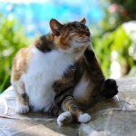 Kediler için ev yapımı pire tasması