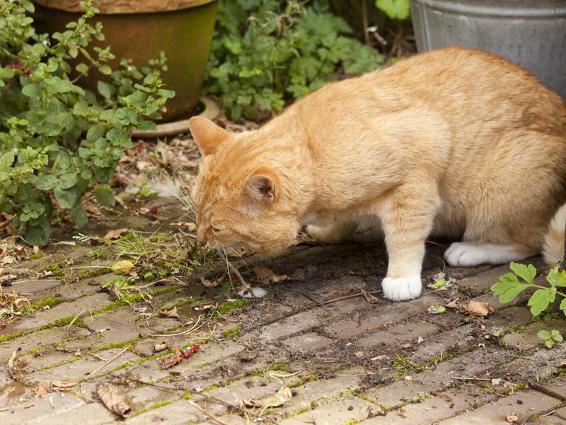 kediler-neden-kusar
