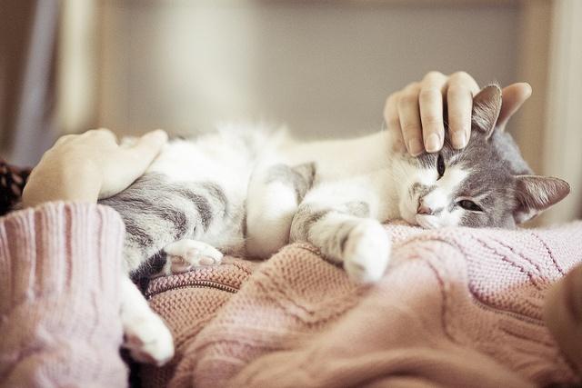 kedilerin-faydalari-2