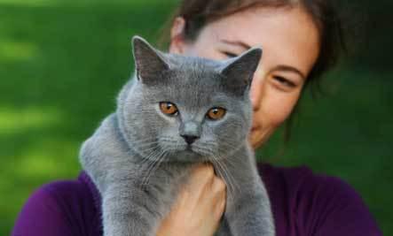 kedilerin-faydalari-5