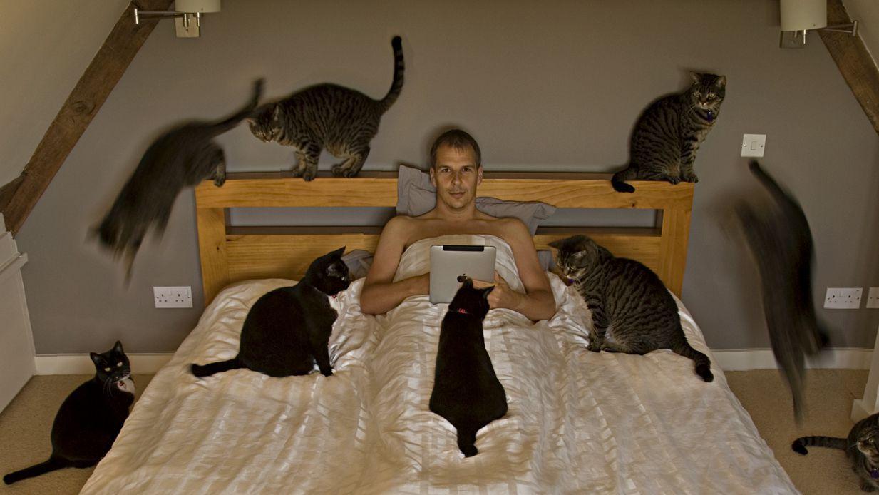 kedilerin-faydalari-8