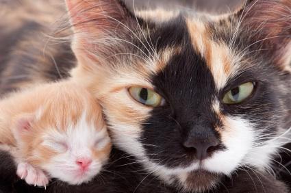 yeni-dogmus-kedi-ve-annesi