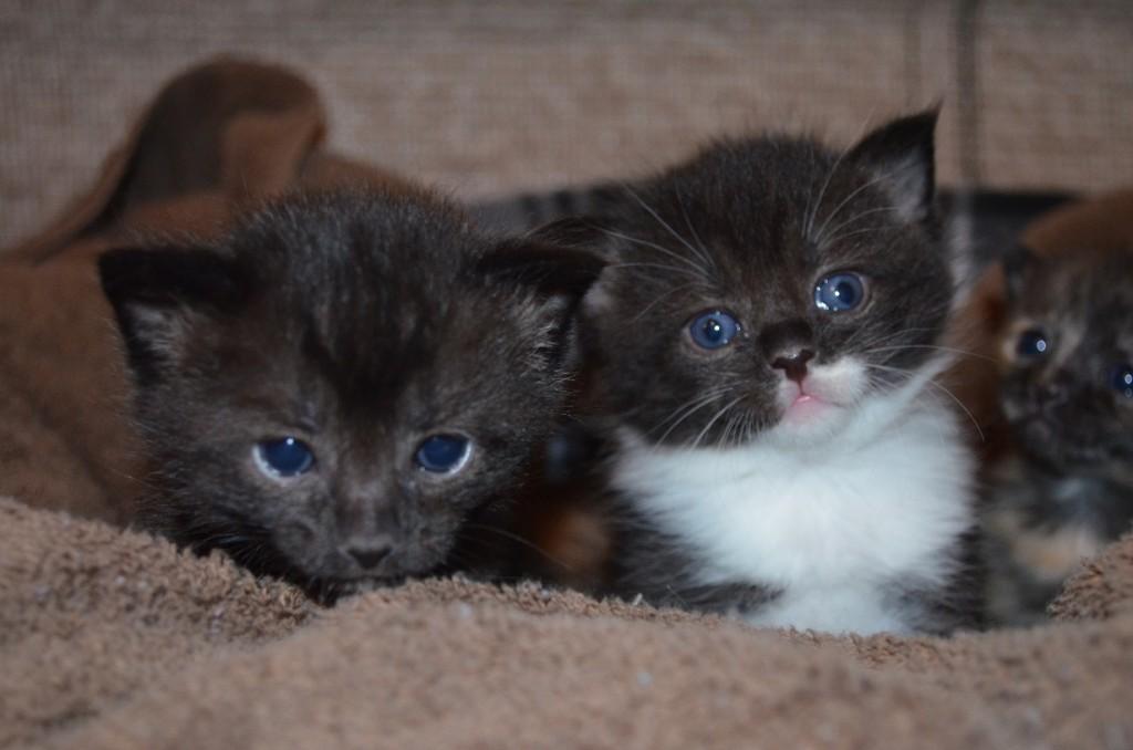 yeni-dogmus-kediler-1