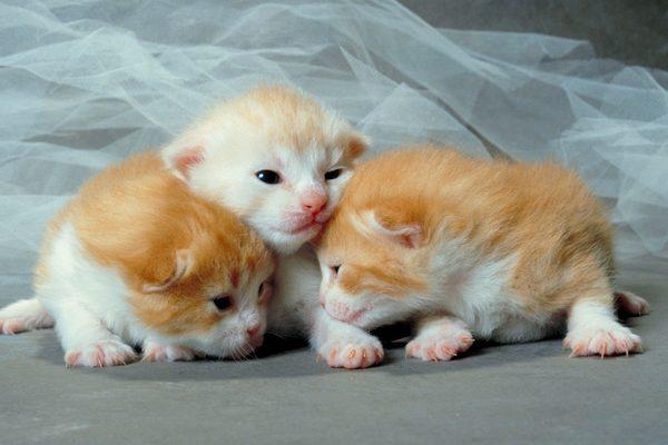 yeni-dogmus-kediler