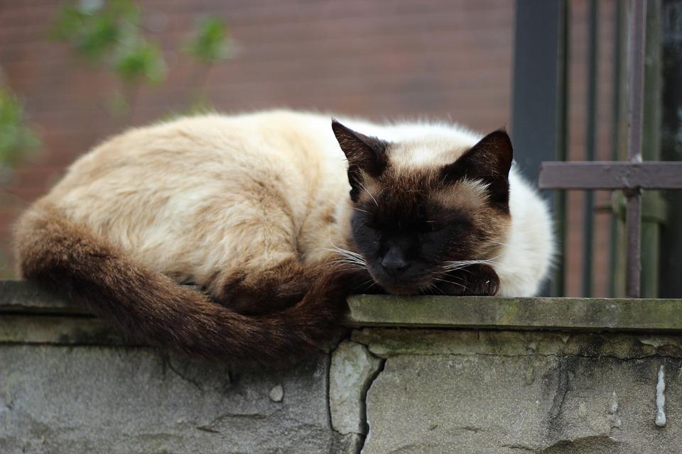 kedi-uykusu