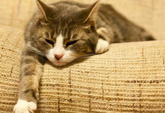 Kedi Sevmeyen Komşusuna Kapak Yaptı