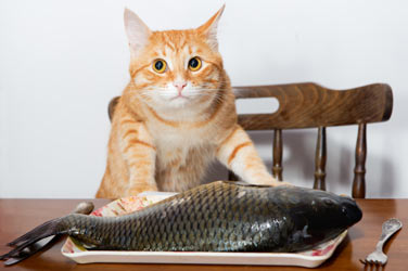 kedilerin-zekasini-gelistiren-yiyececekler