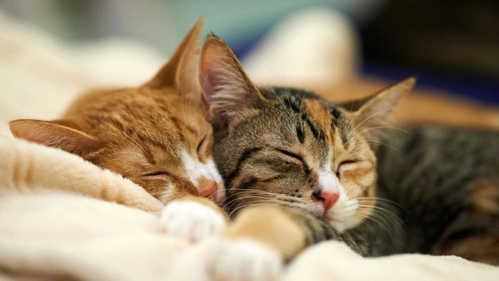 uyuyan-kediler