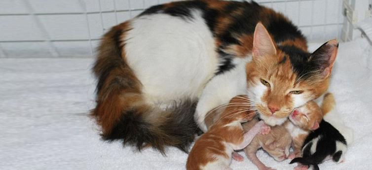 Anne kediler yavrularını neden reddeder