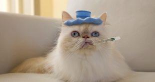 Kedinizi Hasta Edebilecek Asla Aklınıza Gelmeyecek 6 Şey