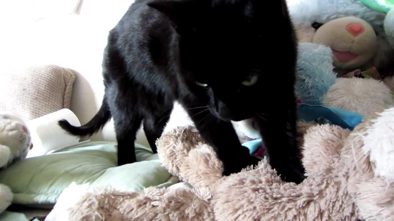 Kedilerin ilginç davranışları ve anlamları