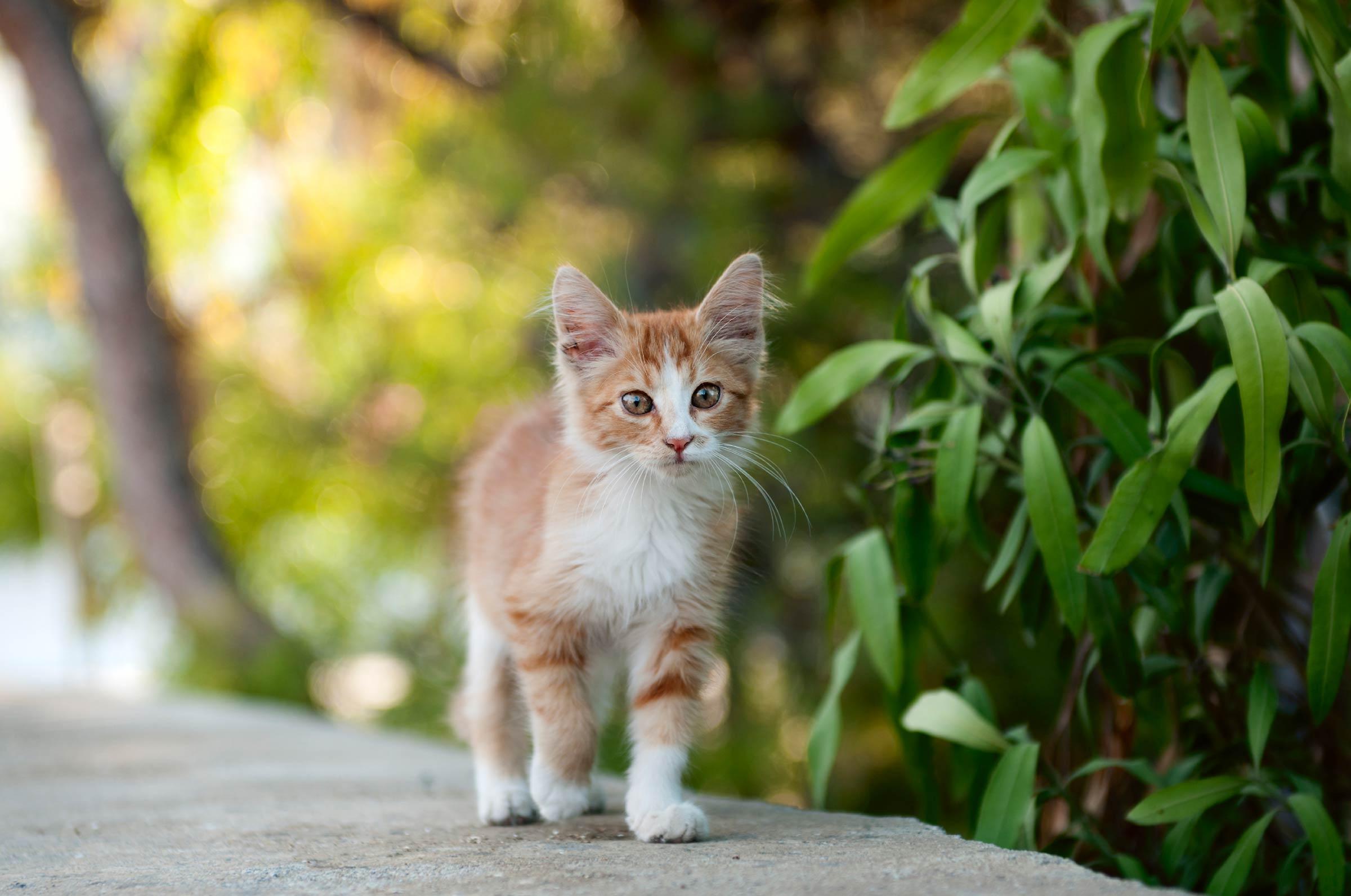Kedinizin Göbeği Hakkında 5 İlginç Gerçek