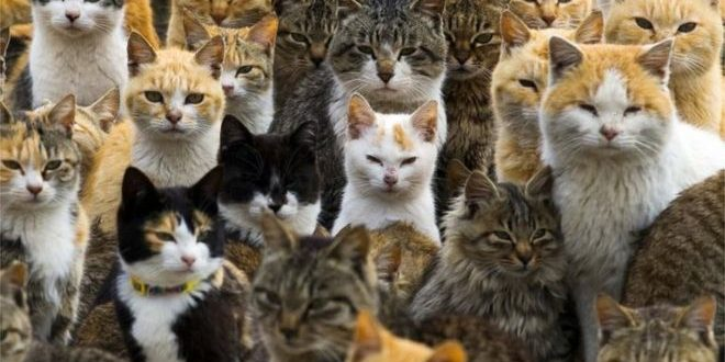 Parlamento Çalışmasına Kedi Engeli