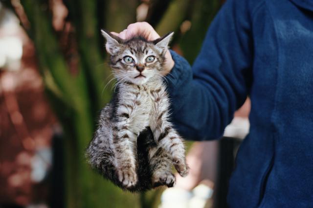 Flaş Kedilerin Gözüne Zarar Verir Mi