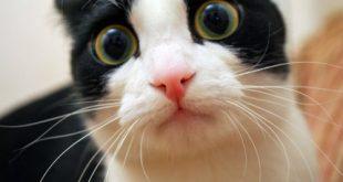 Kedilerin Hayatına Mal Olan İnsan Hataları
