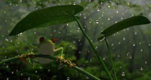 İnanılmaz Bir Doğa Olayı: Kurbağa Yağmuru