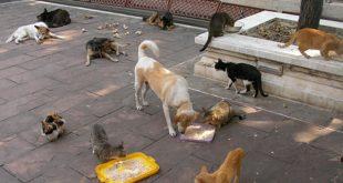 Hayvanları Koruma Kanunu Yeni Tasarıya İtirazlar