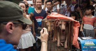 Tayvan'da Kedi Ve Köpek Yemek Yasaklandı