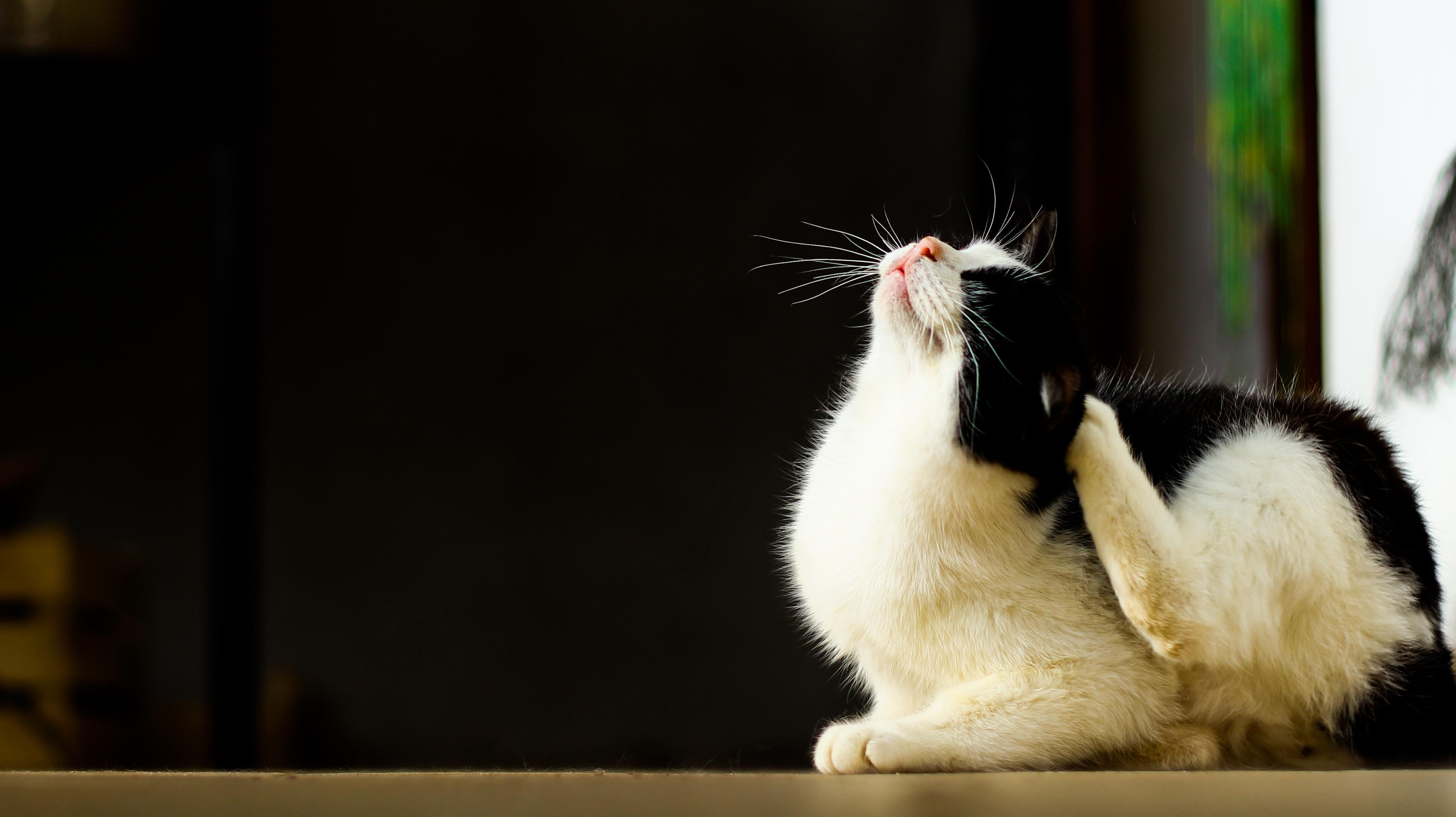 Pirelerin Kedilere 5 Önemli Zararı
