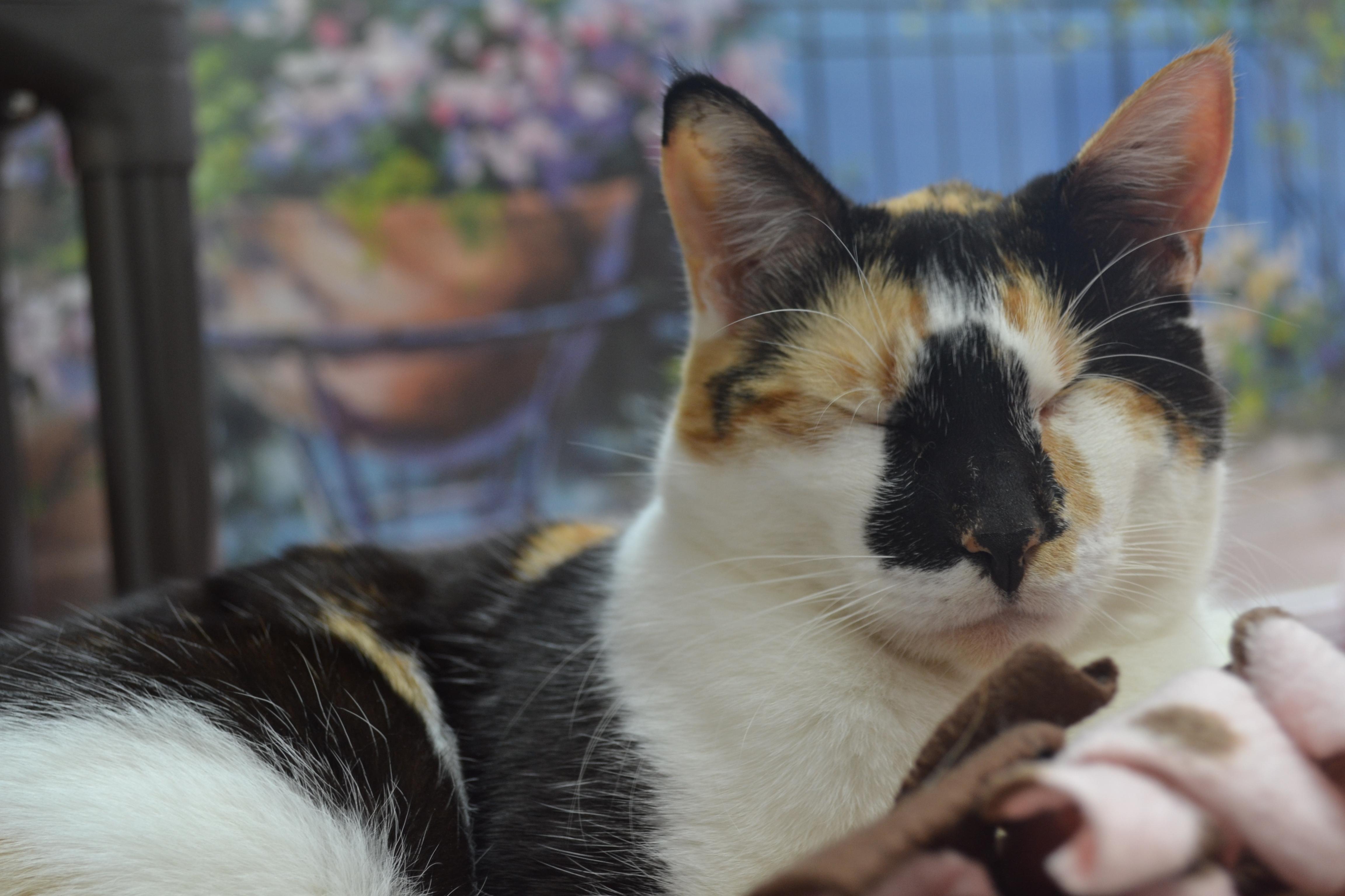 Türkiye'de 15 Milyon Kişi Evini Kedilerle Paylaşıyor 13