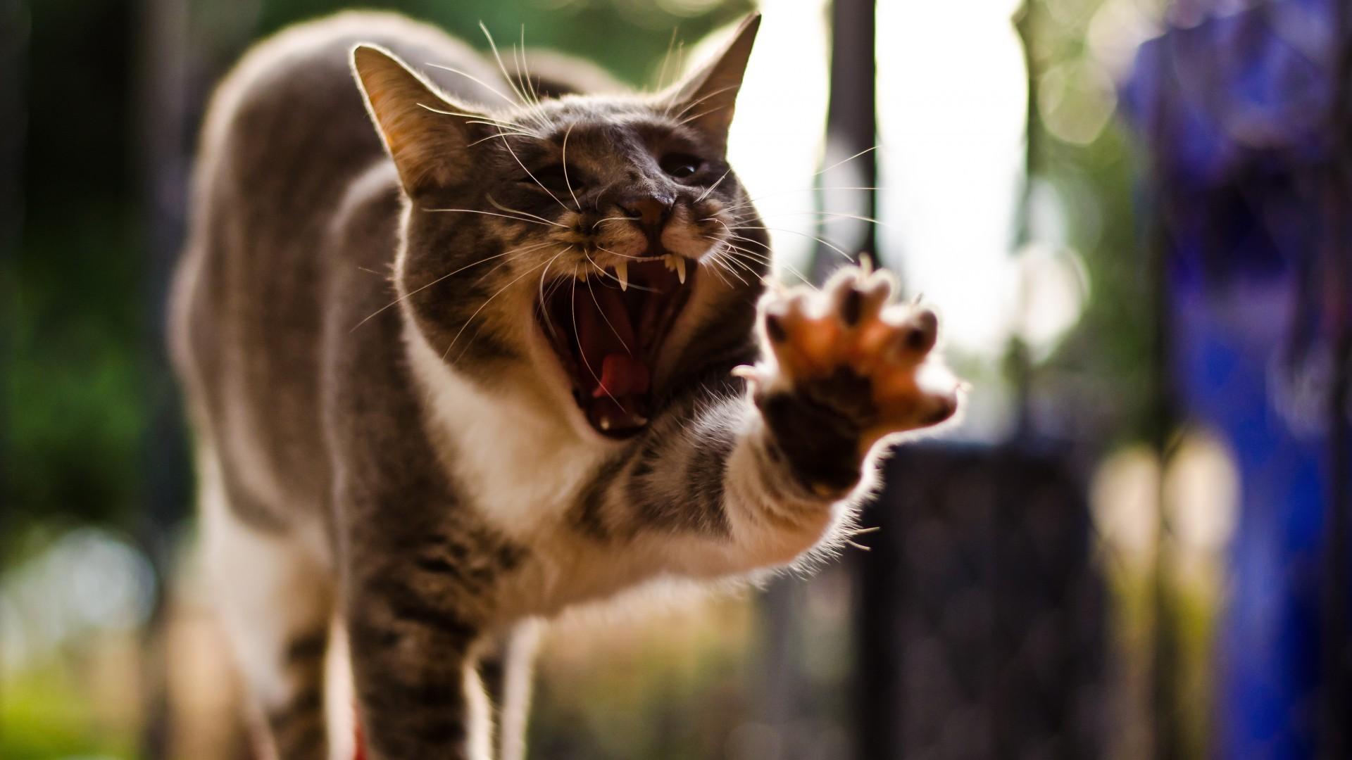 Kedi neden ağızdan kokar: sorunun nedenleri ve çözümü