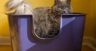Evde Kedi Kumu Yapımı