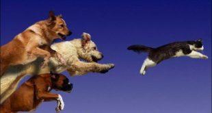 Köpekler Neden Kedileri Kovalar?