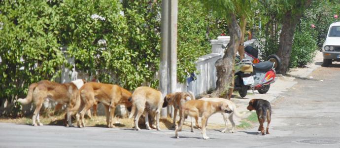 Milas Önder Gazetesi Sokak Köpeklerini Hedef Gösterdi 9