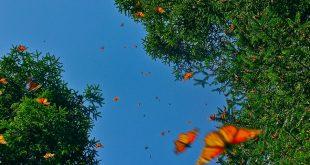 Çevrecilerden Hippi Festivaline Tepki: Kelebek Vadisi Kelebeklerindir!